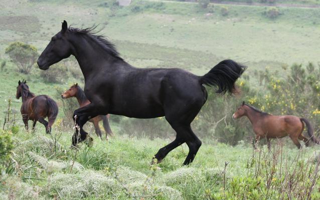 Balla con i cavalli liberi ... dancing with free horses