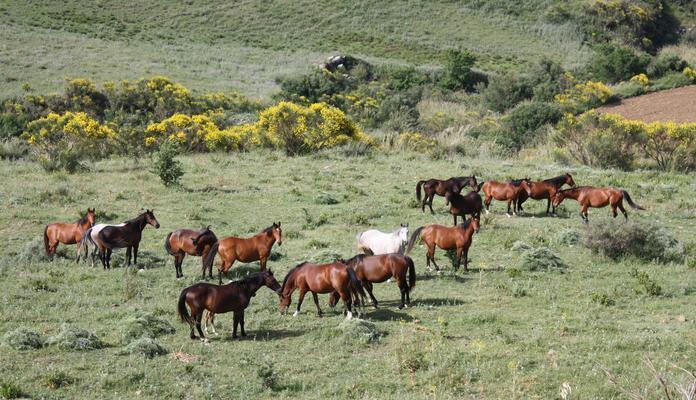 Collesano città dei cavalli