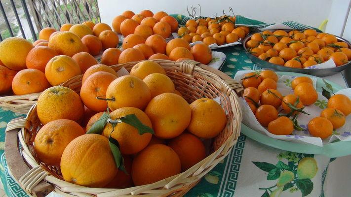 Le arance di Collesano