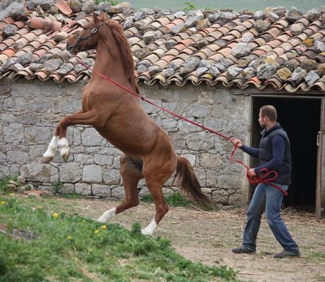 l'amico Fulvio e il giovane stallone